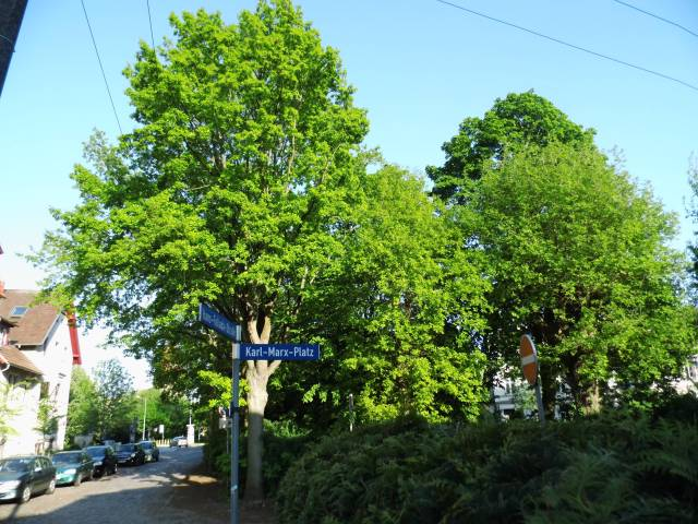 Karl-Marx-Platz 2013 (der Baum rechts im Hintergrund ist einer der Gefällten)