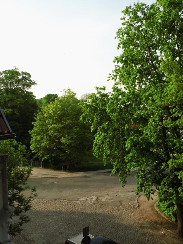 Der Baum rechts im Bild war im vorigen Jahr noch grün. (Auch die anderen Bäume im Hintergrund wurden im vorigen Jahr gefällt).